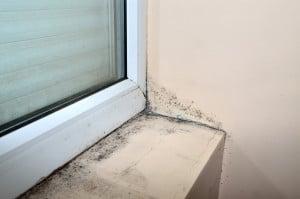Mold below window